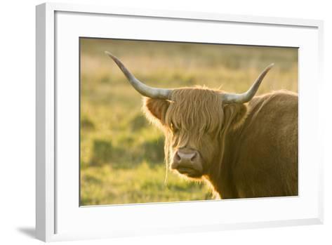 Highland Cattle--Framed Art Print