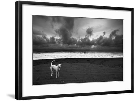 Dalmatian--Framed Art Print