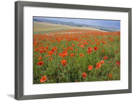 Common Poppies on the Berkshire Downs--Framed Art Print