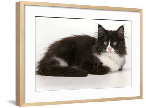 European Cat Black and White--Framed Art Print