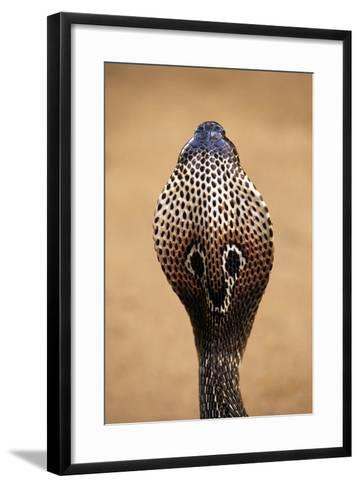 Indian Cobra Close Up of Head--Framed Art Print