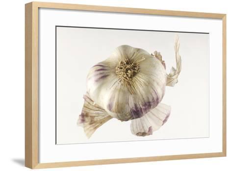 Garlic--Framed Art Print