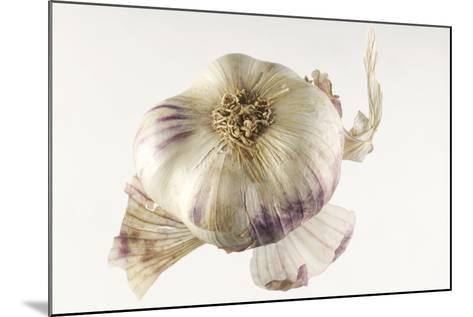 Garlic--Mounted Photographic Print