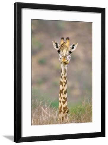 Maasai Giraffe Young with Bird on Head--Framed Art Print