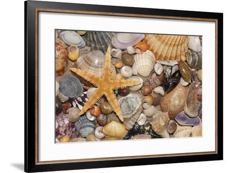 Atlantic Mixed Shells and Starfish on Beach--Framed Art Print