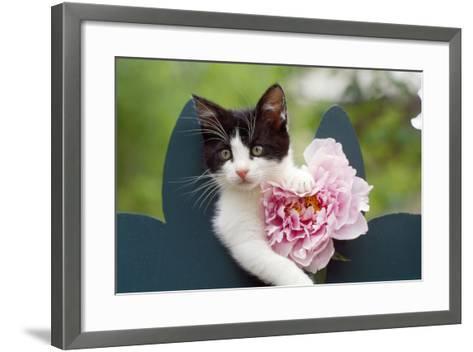 Cute Kitten with Pink Flower--Framed Art Print