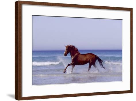 Horse Trotting Through Waves in Sea--Framed Art Print