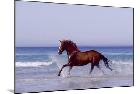 Horse Trotting Through Waves in Sea--Mounted Photographic Print