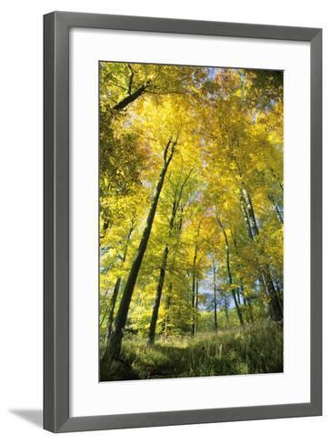 Beech Forest in Autumn Colour--Framed Art Print