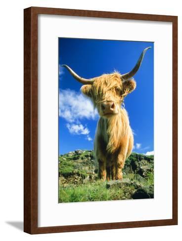 Cattle, Highland Cow--Framed Art Print