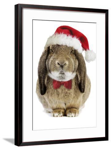 Rabbit Belier Francais Breed Wearing Christmas--Framed Art Print