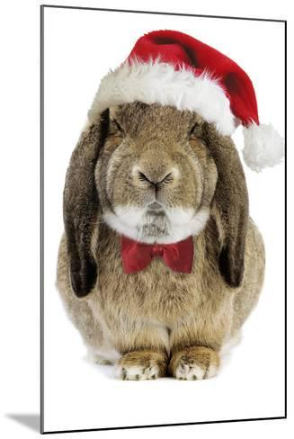 Rabbit Belier Francais Breed Wearing Christmas--Mounted Photographic Print