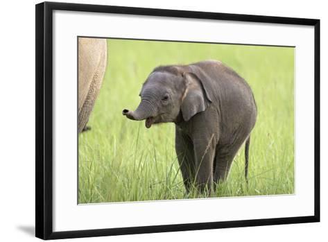 Asian Elephant Calf--Framed Art Print
