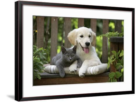 Golden Retriever Puppy Sitting on Bench--Framed Art Print