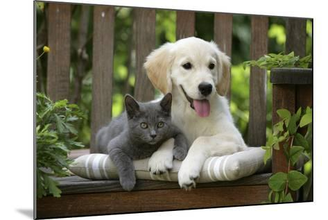 Golden Retriever Puppy Sitting on Bench--Mounted Photographic Print