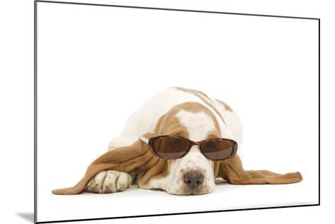 Basset Hound in Studio Wearing Sunglasses--Mounted Photographic Print