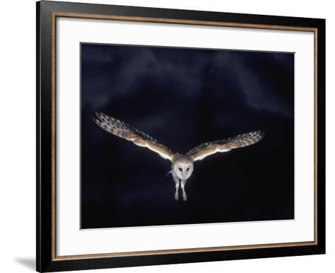 Barn Owl in Flight, at Night--Framed Art Print