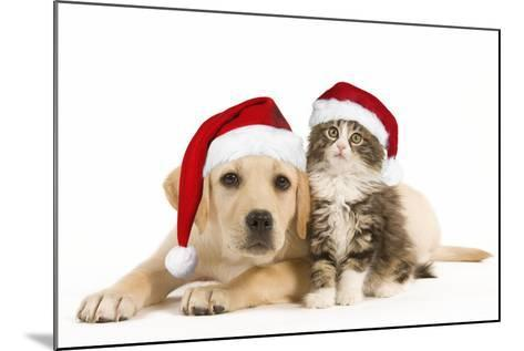 Cat and Dog Labrador Puppy and Norwegian Forest--Mounted Photographic Print
