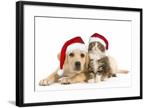 Cat and Dog Labrador Puppy and Norwegian Forest--Framed Art Print