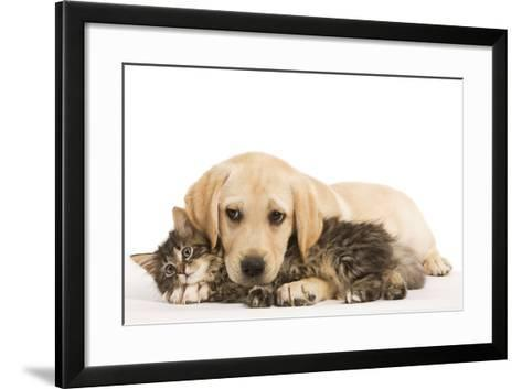 Cat and Dog Labrador Puppy and Norwegian Forest Cat Kitten--Framed Art Print
