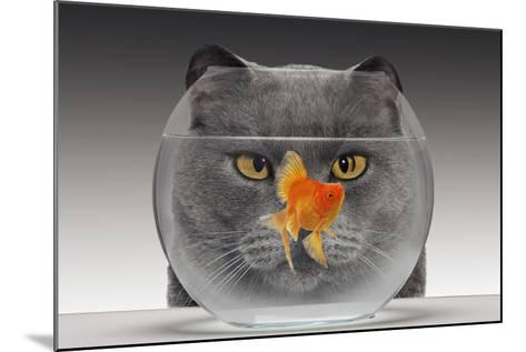 Cat Looks at Goldfish in Bowl--Mounted Photographic Print