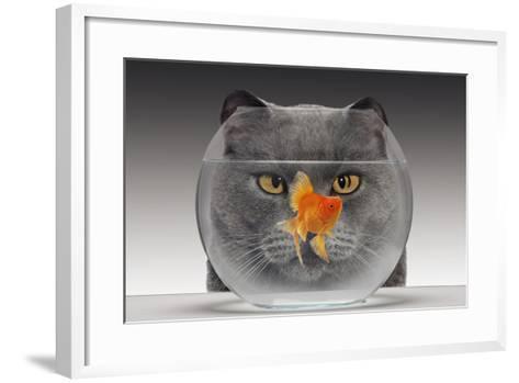 Cat Looks at Goldfish in Bowl--Framed Art Print