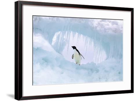 Adelie Penguin--Framed Art Print