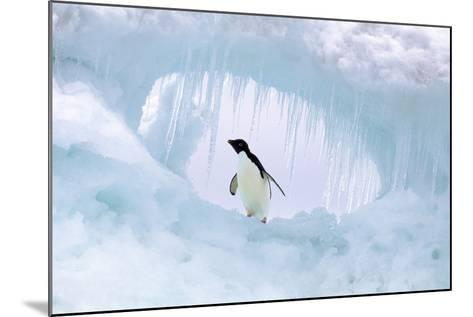 Adelie Penguin--Mounted Photographic Print