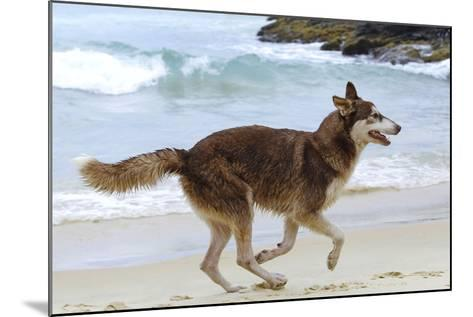 Playing on the Beach--Mounted Photographic Print