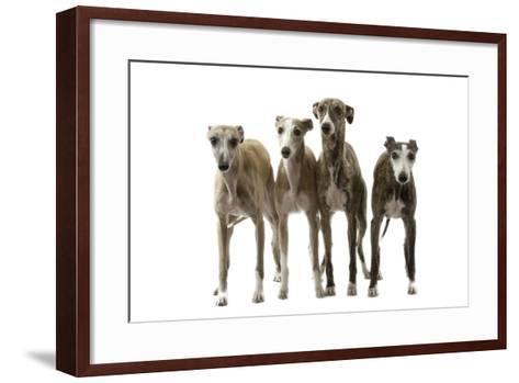 Whippets--Framed Art Print