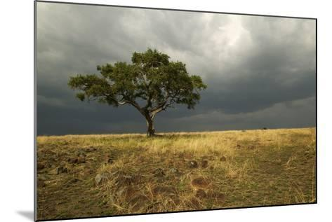 Africa Savannah--Mounted Photographic Print