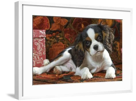 Cavalier King Charles Dog Puppy--Framed Art Print