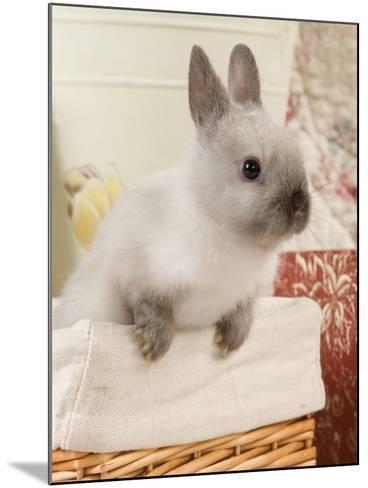 Dwarf Rabbit--Mounted Photographic Print
