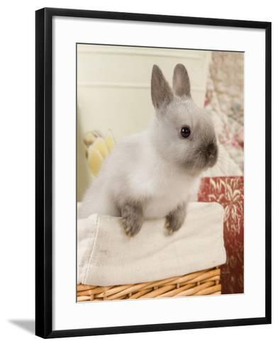 Dwarf Rabbit--Framed Art Print