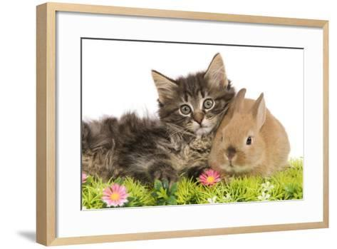 Norwegian Forest Kitten and Dwarf Rabbit--Framed Art Print