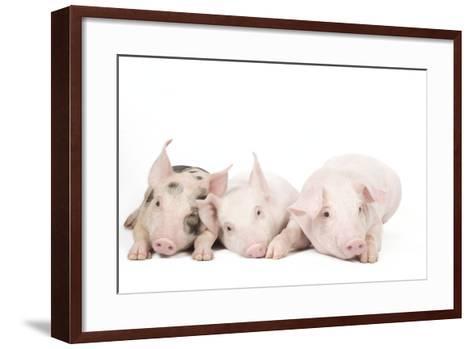 Piglets--Framed Art Print
