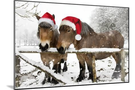 Belgian Horses in Winter Wearing Christmas Hats--Mounted Photographic Print