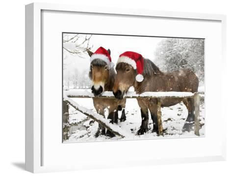 Belgian Horses in Winter Wearing Christmas Hats--Framed Art Print