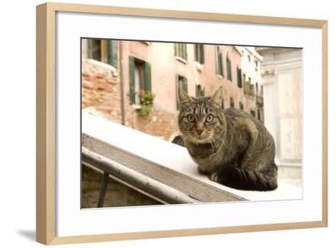 Cat on Ledge--Framed Art Print