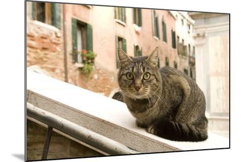 Cat on Ledge--Mounted Photographic Print