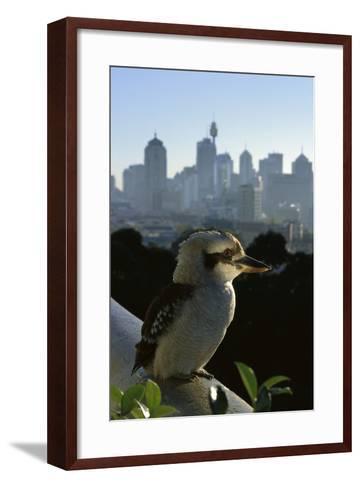 Laughing Kookaburra on City Balcony Rail--Framed Art Print