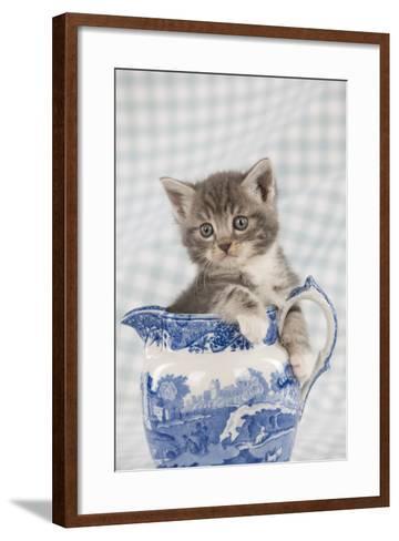 Grey Tabby Kitten Sitting in China Jug--Framed Art Print