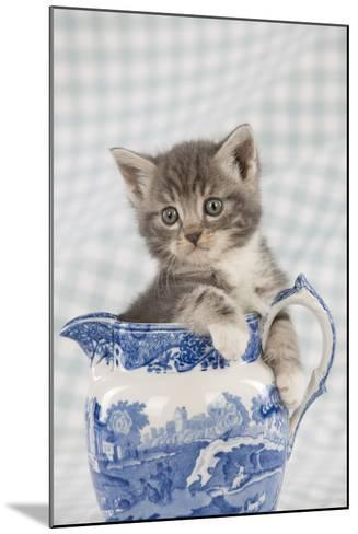 Grey Tabby Kitten Sitting in China Jug--Mounted Photographic Print