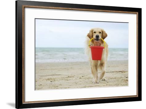 Golden Retriever Holding Bucket--Framed Art Print