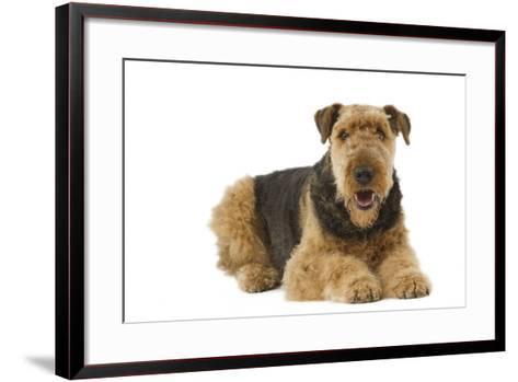 Airedale Terrier--Framed Art Print