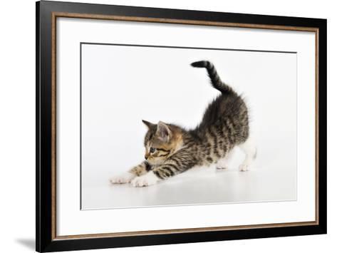 Kitten Stretching--Framed Art Print