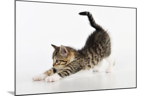 Kitten Stretching--Mounted Photographic Print
