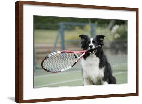 Border Collie Holding Tennis Racket--Framed Art Print