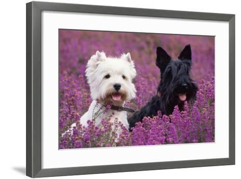 West Highland White Terrier and Scottish Terrier--Framed Art Print