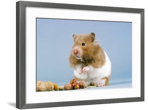 Hamster and Nuts--Framed Art Print